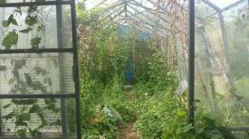 The large greenhouse, home of the bindweed